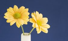 Free Yellow Against Blue Royalty Free Stock Photography - 926777