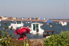Poppy With Sea And Beach Huts Stock Photography