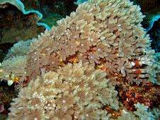Free Detail Of Soft Coral Stock Photography - 927422