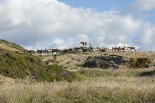 Free Sardinia Royalty Free Stock Photos - 929688