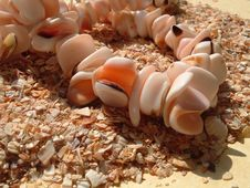 Free Sea Seashells In A Row On The Sand1 Royalty Free Stock Images - 929879