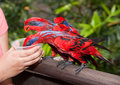 Free Parrot Feeding Stock Images - 9213084