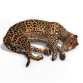 Free Big Cat Leopard Royalty Free Stock Photography - 9213507