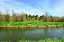 Free Salmon Creek Riverbank Royalty Free Stock Photography - 9211717