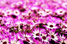 Free Purple Flowers Royalty Free Stock Image - 9213266