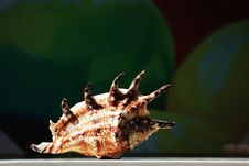 Free Sea Shell Stock Image - 9213351