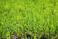 Free Fresh Green Grass Royalty Free Stock Image - 9213586