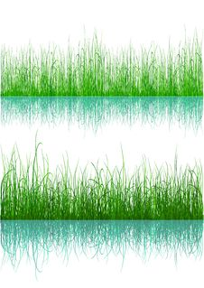 Free Green Grass - Isolated On White Stock Image - 9216481