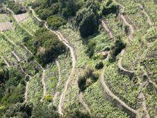Free Cinque Terre Stock Images - 9219224