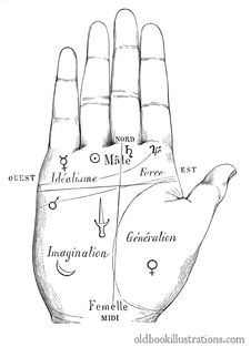 Free Palmistry, Division Of The Hand Stock Photo - 92134340