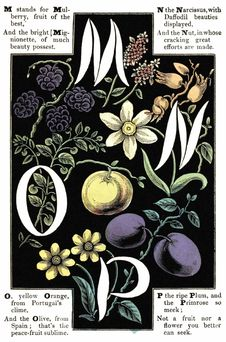 Free Alphabet Of Flowers And Fruit—M, N, O, P Stock Images - 92141894