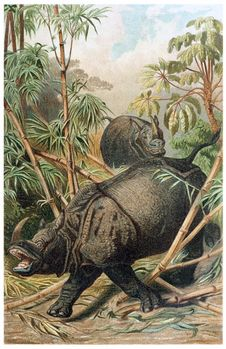 Free Indian Rhinoceros Stock Images - 92142224