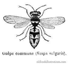 Free Wasp Stock Photos - 92144253