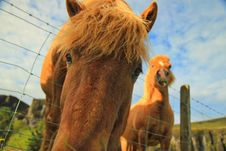 Free Close Up Shot Of Horse Face Beside Another Horse Royalty Free Stock Photos - 92160178