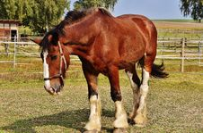 Free Brown And White Horse Standing On Green Grass Under Blue Sky During Daytime Stock Photo - 92160250