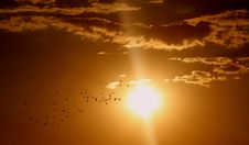Free Flock Of Birds Flying Under Sun And Clouds Stock Photo - 92160290