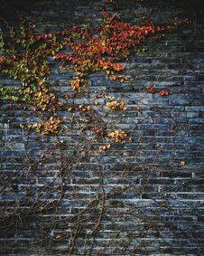 Free Stone Wall With Autumn Leaves Stock Images - 92160624