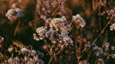 Free Dried Flowers On Meadow Stock Photos - 92160833