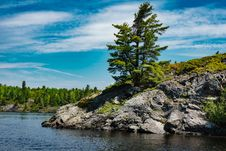 Free Tree On Rocky Coast Royalty Free Stock Images - 92161019