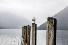 Free Bird On Pier Royalty Free Stock Photography - 92161127