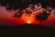 Free Sunset Through Pine Limbs Royalty Free Stock Photo - 92161185