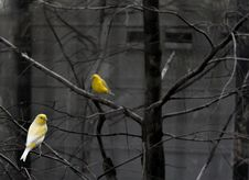 Free Birds In Bare Branches Stock Photo - 92161230