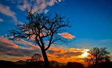 Free Silhouette Of Bare Tree During Sunset Stock Photo - 92161280