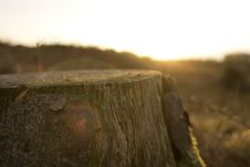 Free Unsplash.com – Tree Stump Brown Wood Cut Sun Rise Lens Flare Stock Photos - 92161523