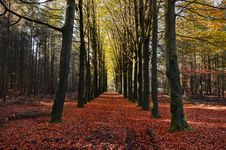 Free Autumn Orange Leaves Trees Trail Royalty Free Stock Images - 92161989