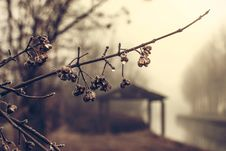 Free Rain Fog Tree Bud Branch Forest Royalty Free Stock Image - 92162196