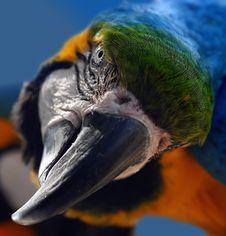 Free Bird, Beak, Parrot, Macaw Stock Images - 92163334