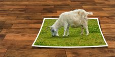 Free Goats, Goat, Grass, Cow Goat Family Royalty Free Stock Photo - 92163375