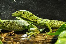 Free Reptile, Scaled Reptile, Lacertidae, Fauna Stock Image - 92163891