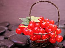 Free Red Currants Stock Photography - 92173532