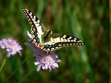 Free Close-up Of Butterfly Pollinating On Flower Stock Images - 92174174