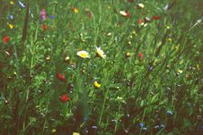 Free Meadow In Bloom Stock Photos - 92174283