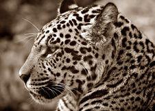 Free White And Black Animal Stock Photos - 92174613