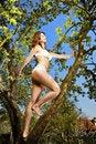 Free Bikini Girl And Tree Royalty Free Stock Photos - 9224368