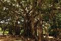 Free Tree Royalty Free Stock Photography - 9224487