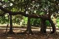 Free Tree Royalty Free Stock Photo - 9224535
