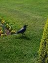 Free Crow Stock Photos - 9226203