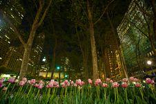 Free City Tulips Stock Photo - 9220260