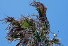Free Palm Tree Stock Photos - 9221823