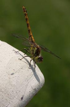 Free Dragonfly On Vase Stock Image - 9221951