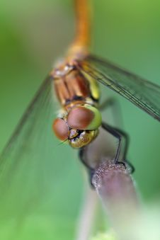 Free Dragonfly Close Eyes Royalty Free Stock Images - 9221989