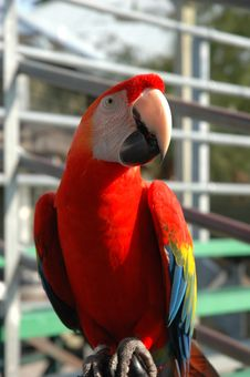 Free Curious Macaw Stock Image - 9222001