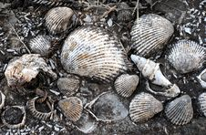 Free Shell Background Stock Photography - 9222132
