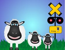 Free Sheep Crossing Royalty Free Stock Images - 9222289