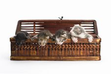 Free Blind Kittens In The Basket. Stock Photo - 9222870