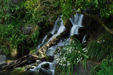 Waterfall With Tree In It Royalty Free Stock Photography